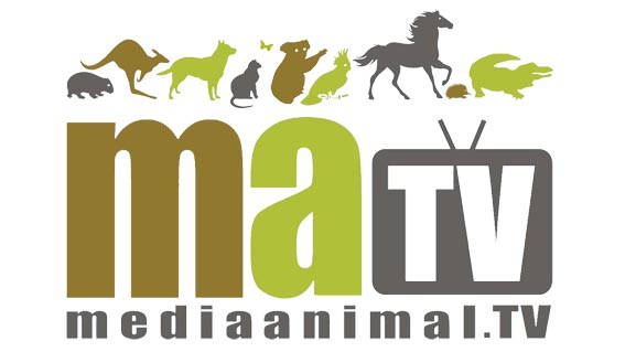 Media-Animal-Tv-Logo-for-Yahoo-7