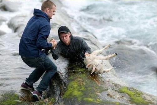 Guys rescue sheep