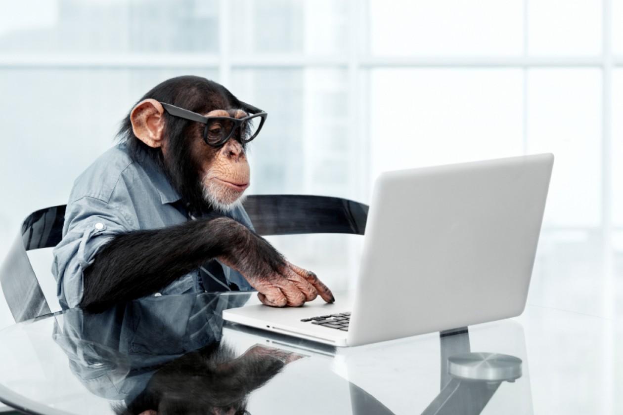 смешные животные за компьютером центральной части города