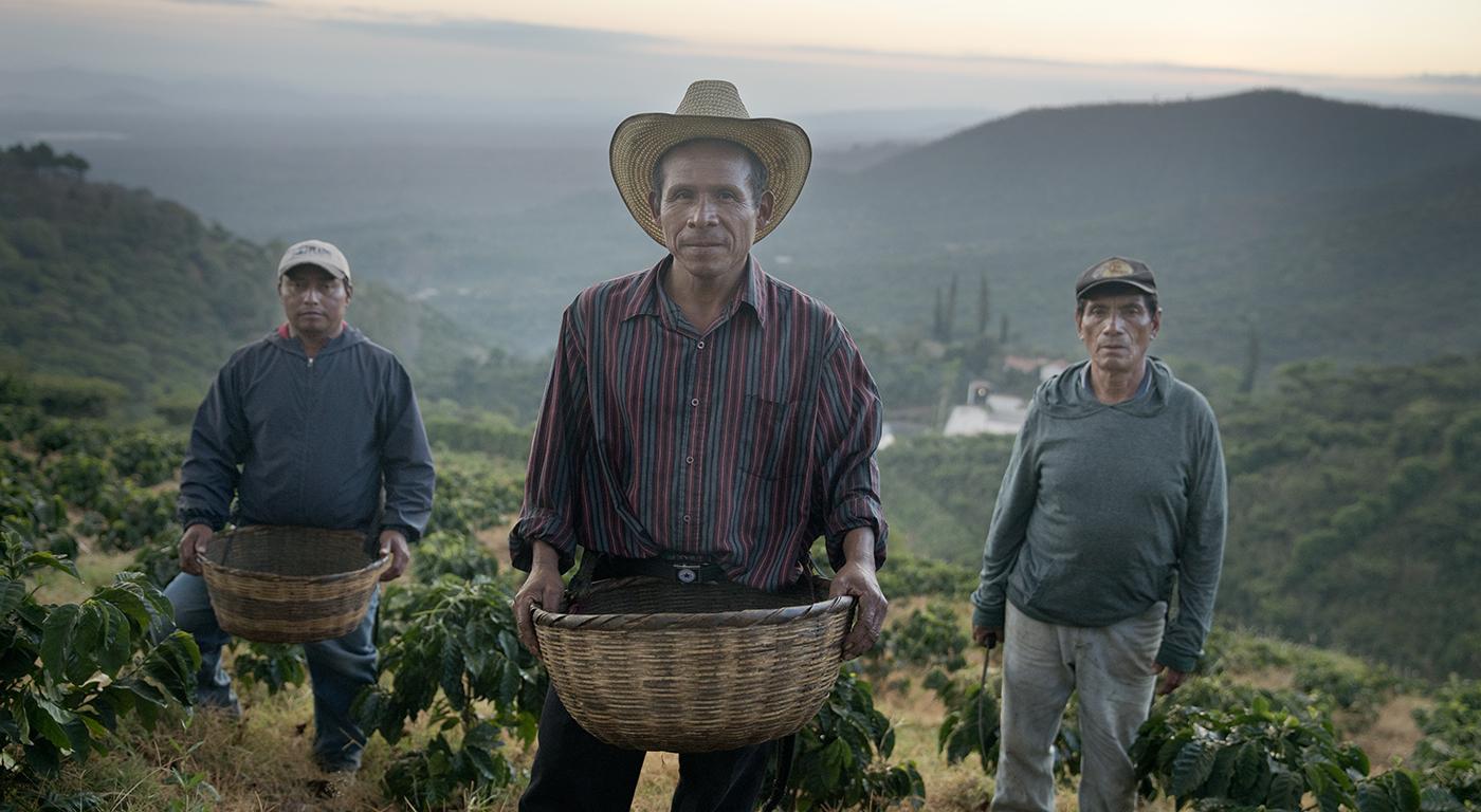 YOLO Wins Campos Coffee