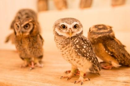2a. Owl CafÇ