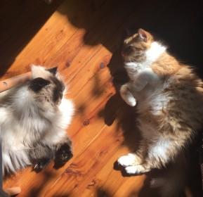 9a. Cat Yoga