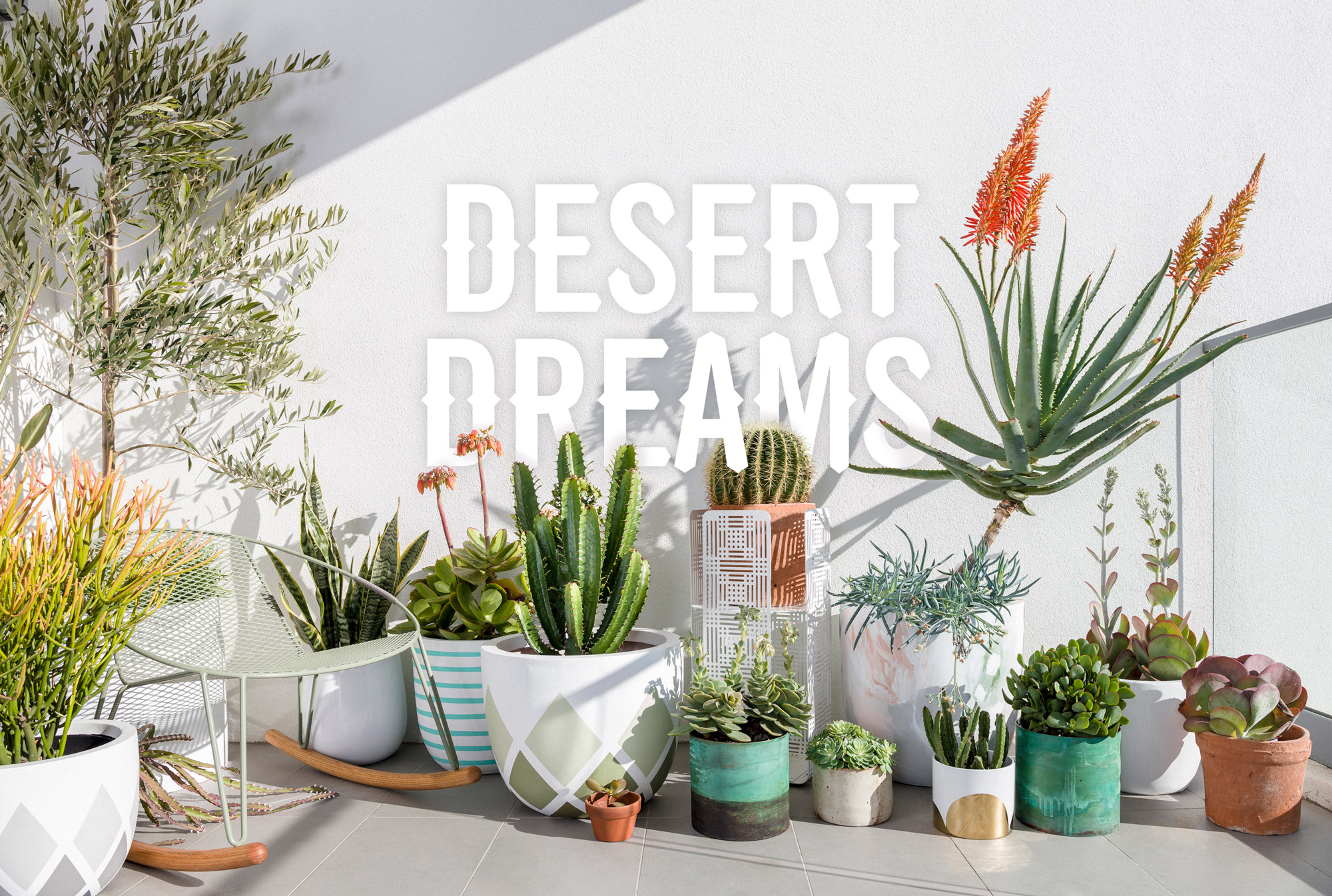 Desert-Dreams----Photo-by-Daniel-Shipp