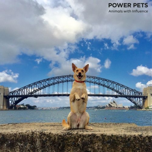 Kou the Kelpie Dingo (Power Pets)