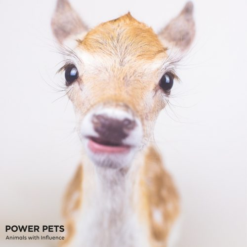 My Deer Little Pony (Power Pets)