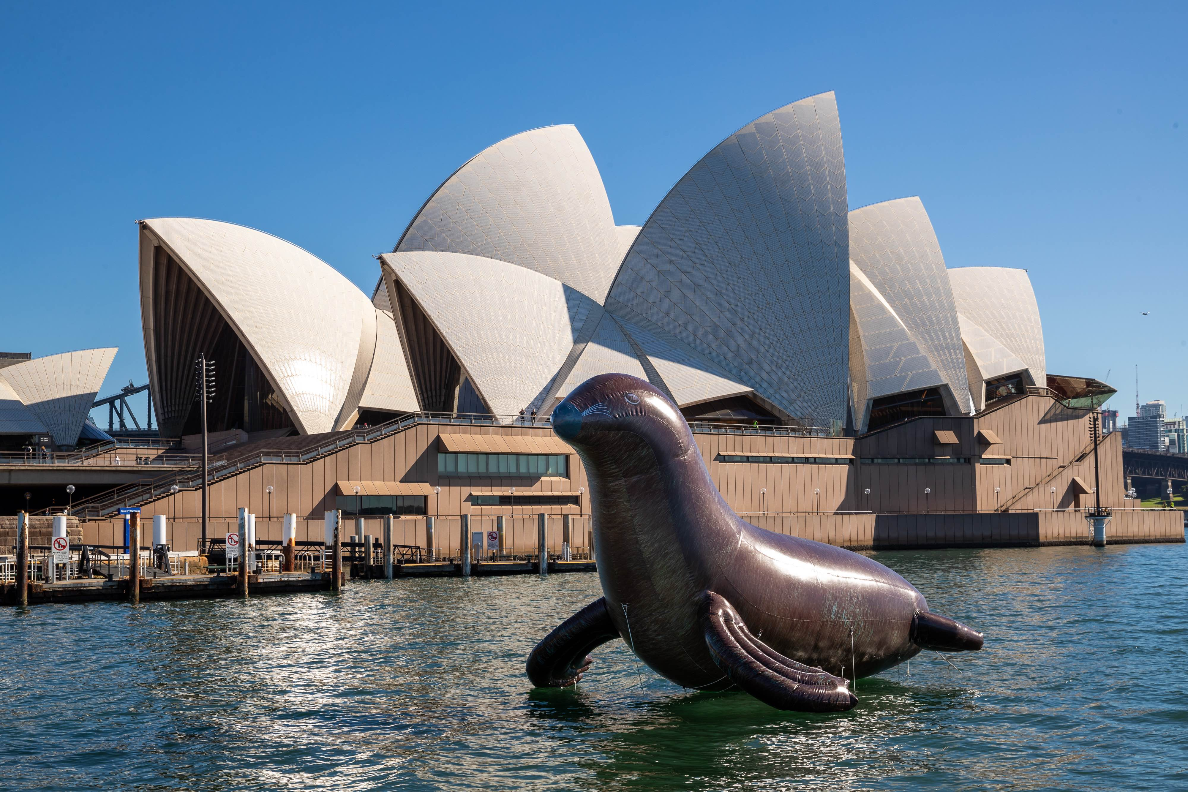 Giant inflatable seal (Sydney Opera House)
